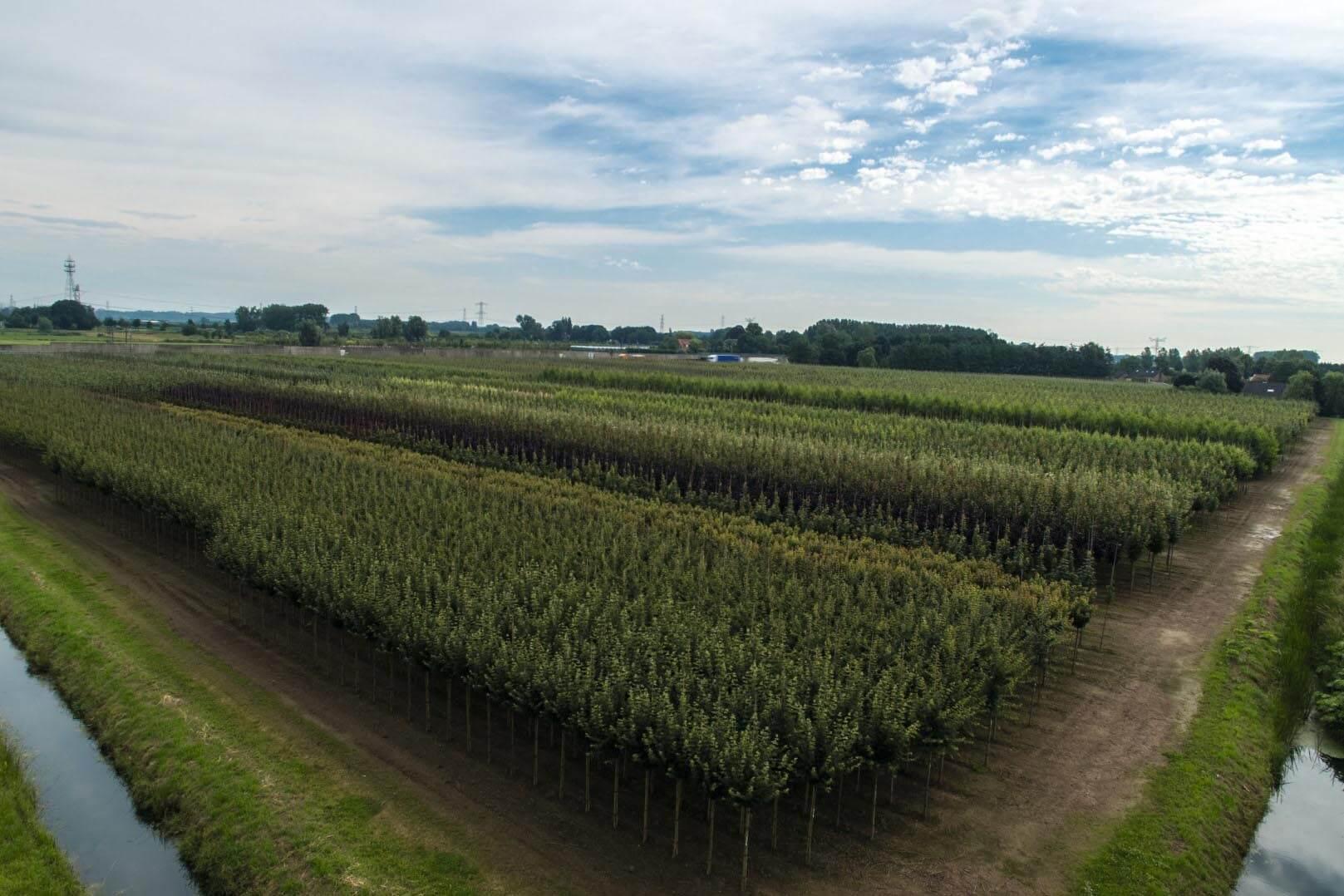 Maizählung per Drohne