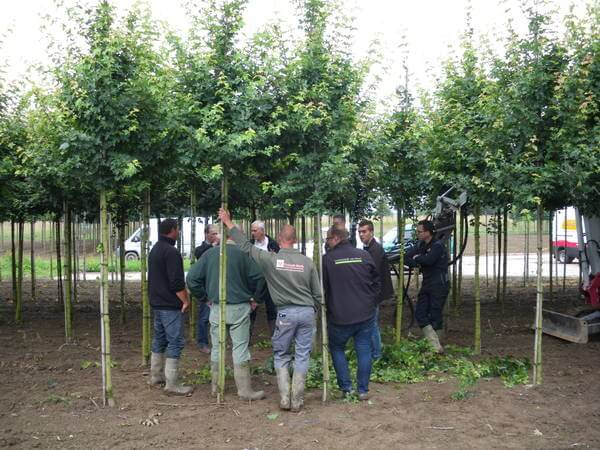 Development of tree pruning unit
