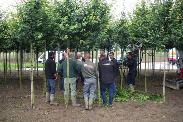 Ontwikkeling bomen snoeiunit