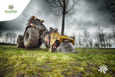 Digging XXL Trees Aktuelles
